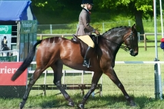 Kilmiston King Kudos & Holly King
