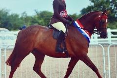 Caitlin Bradley Horse:Pony Firecrest C