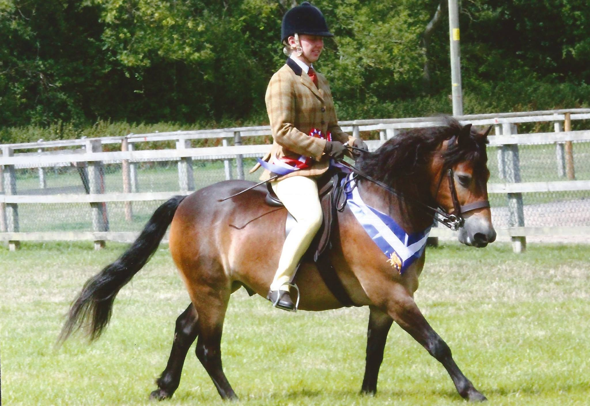 Sweet E M  M Ridden Dartmoorexmoorshetland  Whos Qualified With Likable Moonpenny Aquarius  Elizabeth Etchells With Breathtaking Large Garden Centres Also Horsforth Gardening Services In Addition Garden Wall Art Metal And Seddons Garden Machinery As Well As Garden Sheds In Nottingham Additionally Covent Garden Beads From Whosqualifiedcouk With   Likable E M  M Ridden Dartmoorexmoorshetland  Whos Qualified With Breathtaking Moonpenny Aquarius  Elizabeth Etchells And Sweet Large Garden Centres Also Horsforth Gardening Services In Addition Garden Wall Art Metal From Whosqualifiedcouk