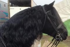 Pumphill Banter rider Isobel Mae Lines