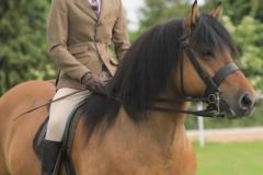 Oliver-Bradshaw-Horse-Pony-Lochlands-Lord-Byron