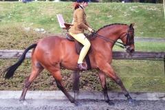 Maddie Bennett Horse/Pony Rotherwood Mr Motivator