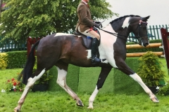 Peter Hodgkinson Horse:Pony Wards Place Picture Perfect