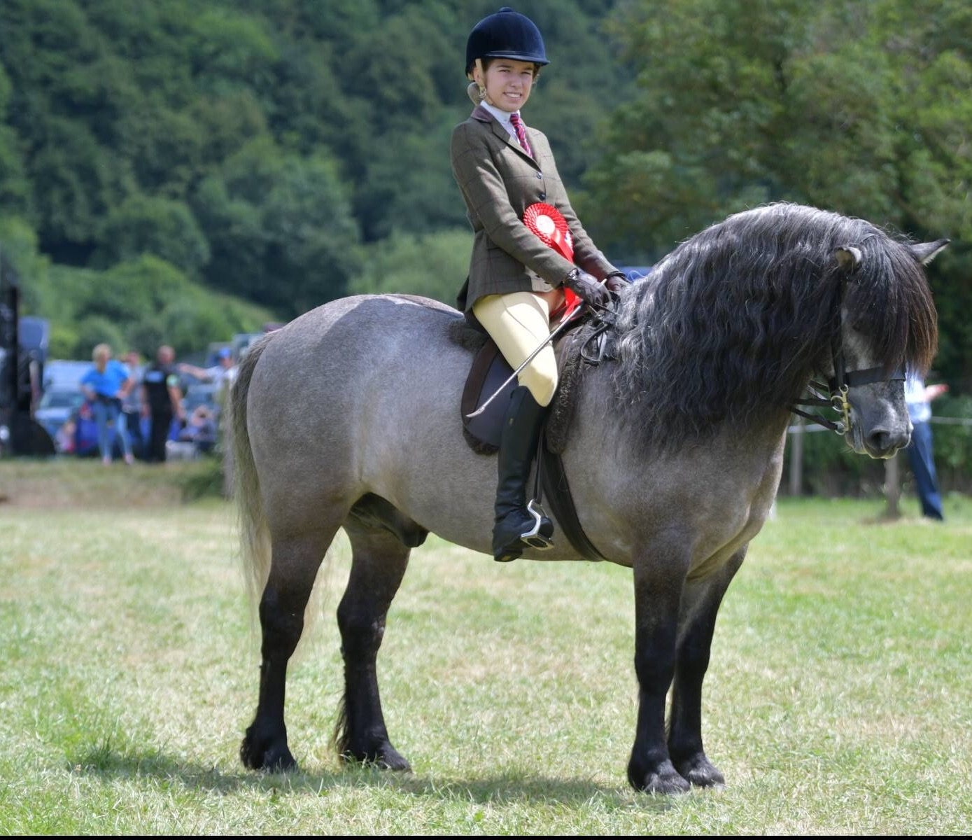Junior Mountain Amp Moorland Ridden Large Breeds Pony Of The
