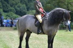 Isobel Lines Horse:Pony Holmedown Taladega