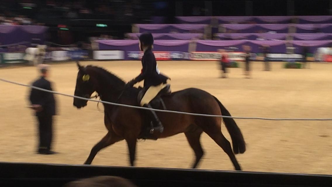Lucy Eddis Horse:Pony Cashel Bay JJ