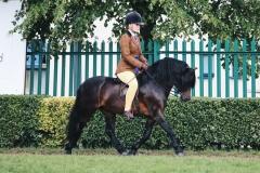 Jessica Carney Horse:Pony Langfield Kaisa