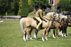 Aimee Rogers Horse and Pony Whisperdale Gold Dubloon