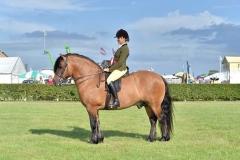 Tracey Milward Horse:Pony Lochlands Gypsy Baron