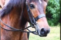 Hayley Reynolds Horse:Pony Okedene Justin