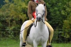 Tori Thomas Horse:Pony Pantycoed Silver Charm