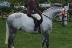 Glenda Gosling rider Faraon De la Diligence