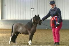 Harriet Wood Horse:Pony Apollos Sol Invictus