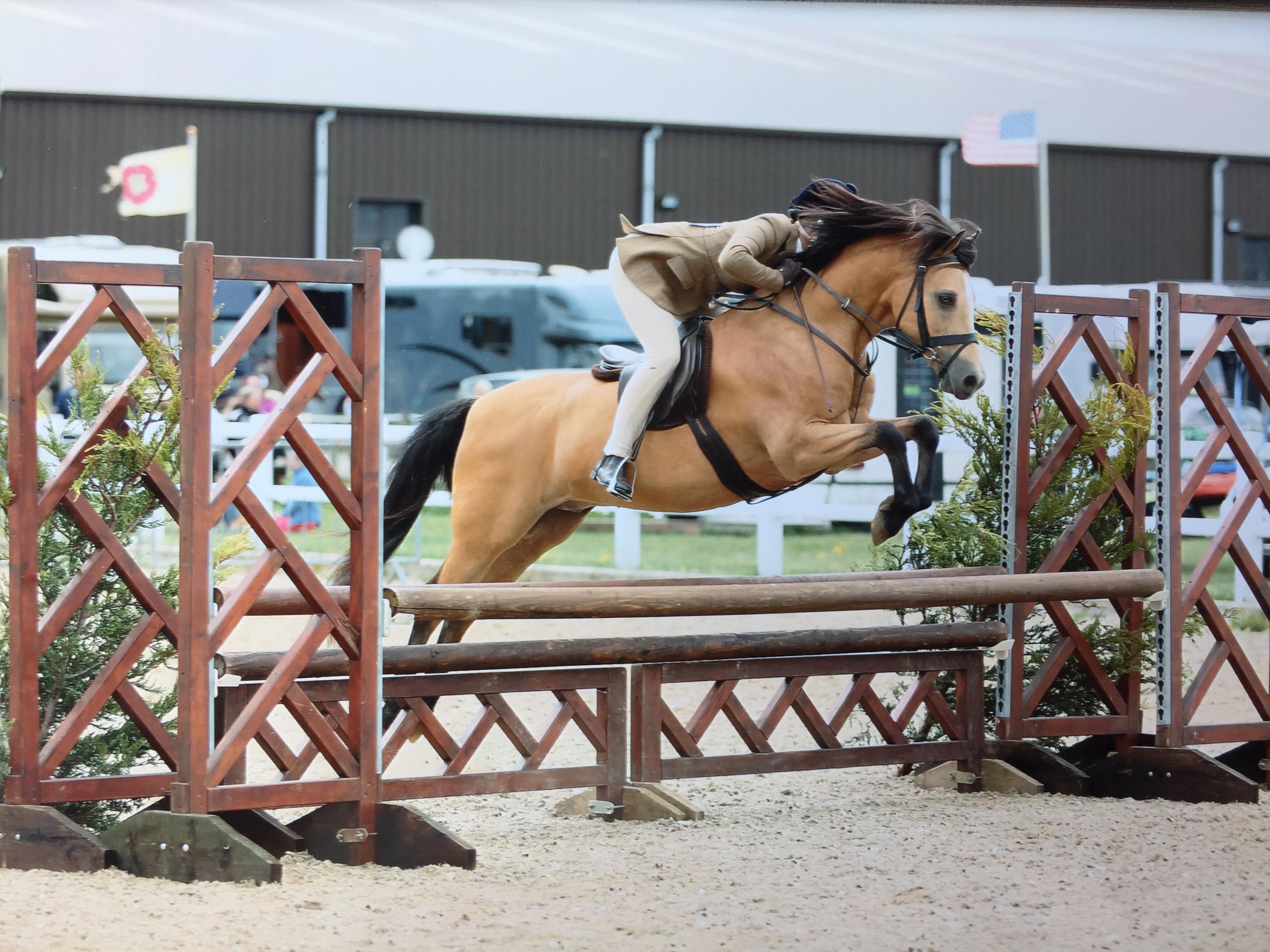 Tori Oakes Horse:Pony Roseberry Model Man