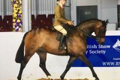 Mia Brown riding Brook Patats