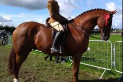 Sarah Rimmer Horse:Pony Smart Alec 111