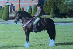 Isobel Lines Horse:Pony Minyfford Mabinogion